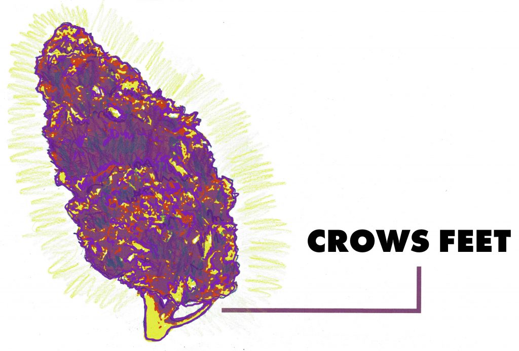 cannabis crows feet